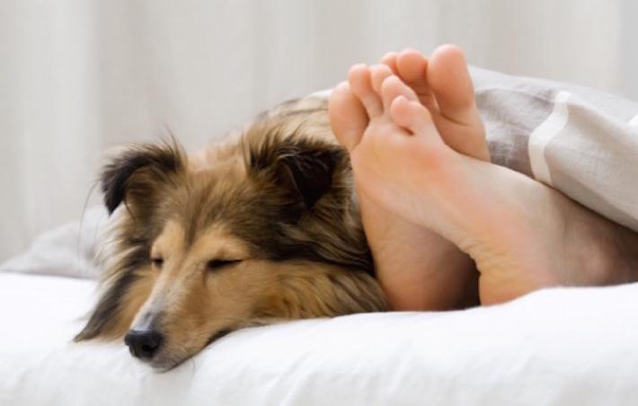 dog&feet